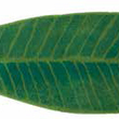 HABIDECOR - Bathroom mat LEAF green