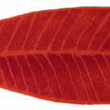 HABIDECOR - Bathroom mat  LEAF Red